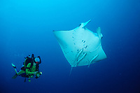 Manta ray and scuba diver, Manta alfredi, Maldives Island, Indian Ocean, Ari Atol (atoll)