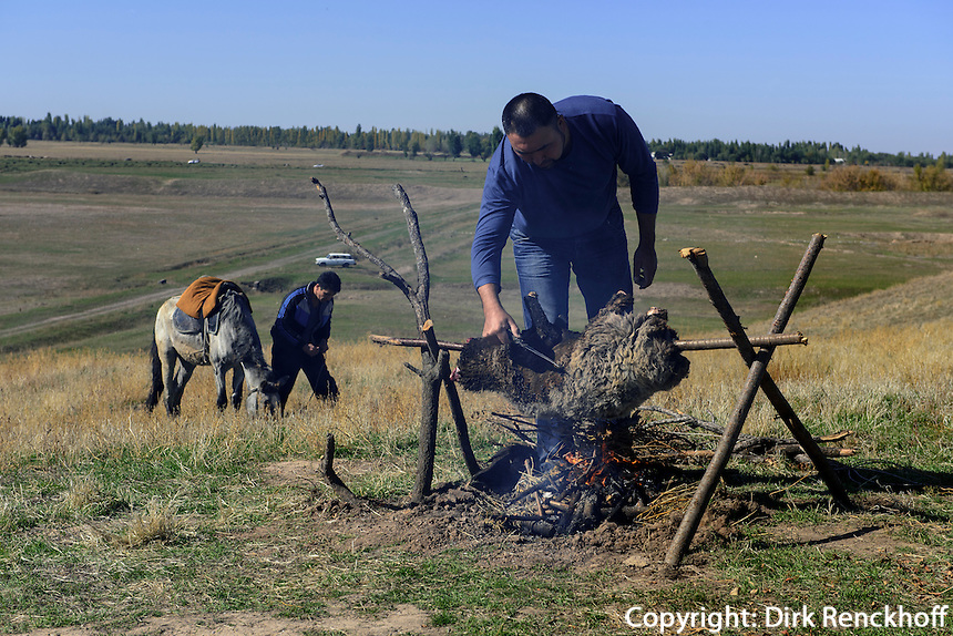 Grillen eines Schafes bei Tokmok, Kirgistan, Asien<br /> barbecue of mutton near Tokmok, Kirgistan, Asia