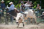 VHSRA - New Kent, VA - 6.10.2014 - Bull Riding