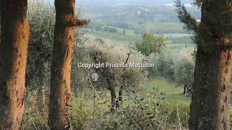 Val d'Arno, Italy - October, 5, 2012:  A Tuscan landscape in late afternoon.