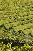 Europe, France, Aquitaine, Pyrénées-Atlantiques, Béarn, Jurançon: Vignoble du  Domaine  Larredya, // Europe, France, Aquitaine, Pyrenees Atlantiques, Bearn, Jurançon: Camin Larredya domain Vineyard