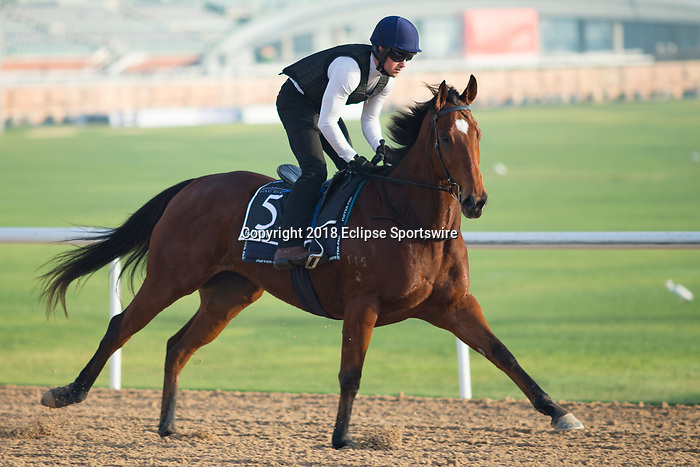DUBAI,UNITED ARAB EMIRATES-MARCH 30: Faatinah,trained by David Hayes,exercises in preparation for the Al Quoz Sprint at Meydan Racecourse on March 30,2018 in Dubai,United Arab Emirates (Photo by Kaz Ishida/Eclipse Sportswire/Getty Images)