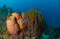 Feather stars, greenish crinoid, Davidaster rubiginosa, giant barrel sponges, Xestospongia muta, Martinique, French Island, Caribbean Sea, Atlantic