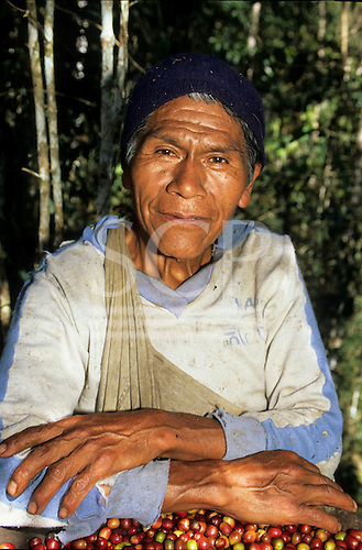 San Juan del Oro, Peru. Coffee grower in worn out sweatshirt with coffee beans which he has just picked.