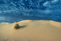 Sanddunes in the Simpson Desert Australia