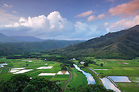 Taro fields near Hanalei, Kauai, Hawaii. Hanalei National Wildlife Refuge.