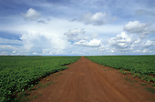 Mato Grosso State, Brazil. Dirt road leading through a soya plantation in a previously forested area.
