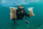 Brazilian Fred Gurgel collecting algae and seaweeds (macroalgae) in Lizard Island