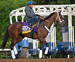 October 26, 2014:  Unbridled Forever, trained by Dallas Stewart, exercises in preparation for the Breeders' Cup Distaff at Santa Anita Race Course in Arcadia, California on October 26, 2014. Scott Serio/ESW/CSM