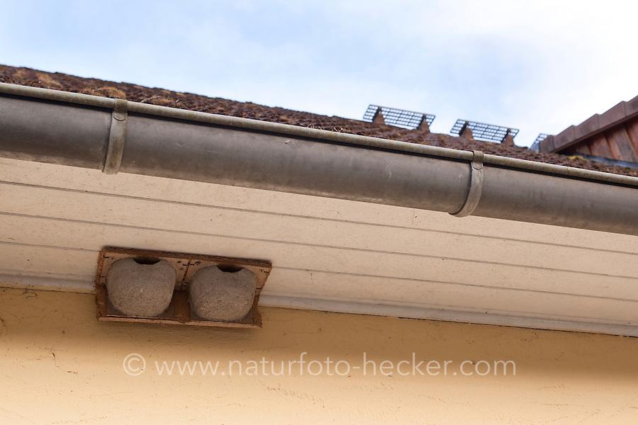 Nisthilfe für Schwalben, Kunstnester für Mehlschwalbe, Schwalbe an Hausfassade, geschützt unter Dachüberstand, Schwalbennest, Schwalbennester, Delichon urbica, common house martin