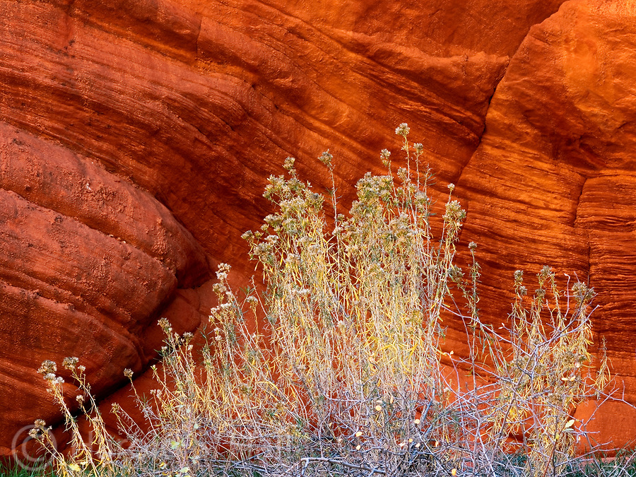 The cliffs outside of Zion National Park allow for many natural abstract compositions.