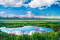 20, 3020+ Ft. Mt. Denali, Fireweed And Tundra Pond, Denali National Park, Alaska