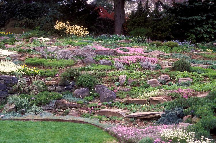 Rock garden with sloping hillside, alpine plants mixture, flowers, thymus, lawn grass