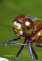 1O06-006z  Skimmer Dragonfly face and compound eyes