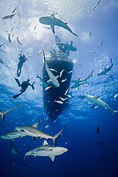 Caribbean reef shark, Carcharhinus perezii, scuba diver, boat, Bahamas, Caribbean Sea, Atlantic Ocean