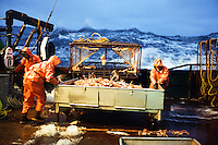 Bering Sea Crab