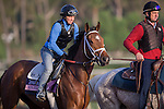 OCT 27 2014:Angela Renee, trained by Todd Pletcher, exercises in preparation for the Breeders' Cup Juvenile Fillies at Santa Anita Race Course in Arcadia, California on October 27, 2014. Kazushi Ishida/ESW/CSM