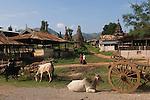 Indein village cattle graze against a background of over 1050  ruined Buddhist stupas mostly erected in the eighteenth century. In Dein or Indein village stupas. Inle Lake. Myanmar (Burma.) 2006.