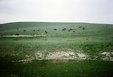 Die kasachische Steppe ist weit über die Landesgrenzen hinaus bekannt. Für viele westliche Abenteuertouristen ist sie ein Sehnsuchtsort. Die Steppe ist das Zuhause der kasachischen Nomaden, die seit Jahrhunderten ihre Herden in den weiten Ebenen hüten. Kasachstan ist rohstoffreich und prosperiert. Kritik an den Schattenseiten des Aufstiegs duldet das System von Präsident Nursultan Nasarbajew nur geringfügig. Bilder von Hinterhöfen und grauen Vorstädten sollen nicht an die Öffentlichkeit gelangen. / Kazakhstan is a resource-rich and prosperous country.  President Nursultan Nasarbajew's system hardly allows any criticism. Pictures of backyards and suburbs are not supposed to go public.