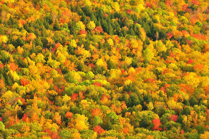 Late afternoon light warms the colors of autumns painted forest.