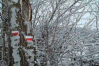 Snow covered branches of trees with signs for hikers, Selonnet, French Alps, France.