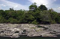 4700 toras de mogno boiam no Rio Xingu proximo a Sao Felix do Xingu, no Para em 13/08/2002. A madeira apreendida pelo IBAMA ha 40 dias supostamente pertence a Osmar Ferreira, o Rei do Mogno<br /> Foto Olaf Grimburg