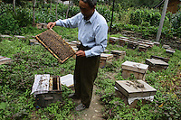 A man stands amongst a collection of bee hives in the forests of Pingwu County in northern Sichuan Province, south-west China.