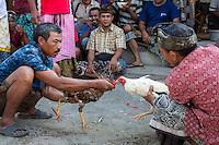 Bali, Indonesia.  Cock Fighting in an Indonesian Village.  Men Goad their Birds before Releasing them to Fight.