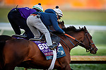 October 31, 2020: Front Run The Fed, trained by trainer Chad C. Brown, exercises in preparation for the Breeders' Cup Turf Sprint at  Keeneland Racetrack in Lexington, Kentucky on October 31, 2020. Alex Evers/Eclipse Sportswire/Breeders Cup
