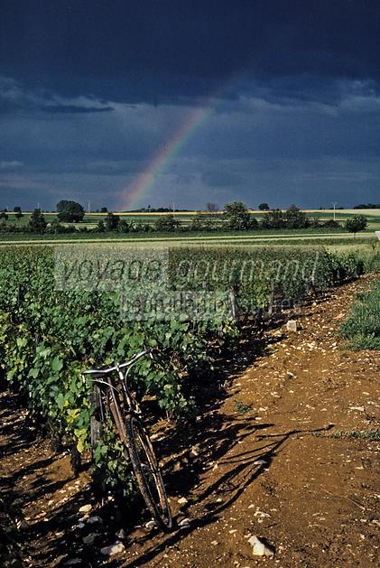 Europe/France/Bourgogne/21/Côte d'Or: vignes près de Beaune