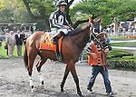 Royal Currier, ridden by Stewart Elliott, runs in the Vosburgh Invitational Stakes (GI) at Belmont Park in Elmont, New York on September 29, 2012.  (Bob Mayberger/Eclipse Sportswire)