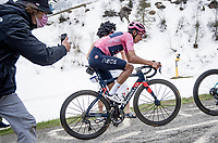 Maglia Rosa / Pink Jersey / GC Leader Egan Bernal (COL/Ineos Grenadiers) cheered up the final part of the Monte Zoncolan <br /> <br /> 104th Giro d'Italia 2021 (2.UWT)<br /> Stage 14 from Cittadella›Monte Zoncolan (205km)<br /> <br /> ©kramon
