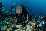 Charlie Veron takes coral samples in GBR, S 12°07.965', E 143°48.838'