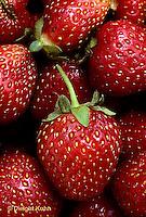ST04-013c  Strawberries - Sparkle variety