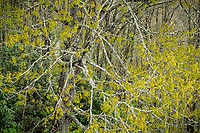 Trees in spring, Blue Ridge Parkway