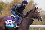 October 28, 2015:  Sky Marshal, trained by Barbara J. Minshall and owned by W. Bruce Lunsford , Barbara Minshall, exercises in preparation for the Breeders' Cup Juvenile Turf at Keeneland Race Track in Lexington, Kentucky on October 28, 2015. Jon Durr/ESW/CSM
