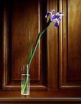 Iris, flower,