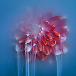 Submerged flowers appear to be submerged in smoke by Robert Peek