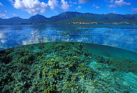 A snorkelers over/under view of the coral reefs (table reefs) of Kaneohe Bay, Oahu.