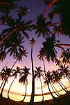 Palm trees at sunset, Bora Bora, French Polynesia