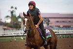 DEL MAR, CA - NOVEMBER 01: Decorated Knight, owned by Saleh al Homaizi & Imad Al Sagar and trained by Roger Charlton, exercises in preparation for Breeders' Cup Mile during morning workouts at Del Mar Thoroughbred Club on November 1, 2017 in Del Mar, California. (Photo by Michael McInally/Eclipse Sportswire/Breeders Cup)