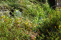 A sea of native plants competes for light and space at the Vista Verde school native garden.