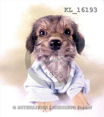 Interlitho, Alberto, ANIMALS, dogs, photos, puppy, pullover(KL16193,#A#) Hunde, perros