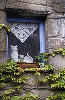 Europe/France/Pays de la Loire/44/Loire-Atlantique/Parc Naturel Régional de Brière/Kervalet: Détail fenêtre - Chat en faïence à la fenêtre