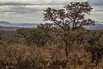 Bushveld, Kruger National Park, South Africa