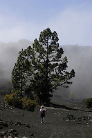 Female hiker hiking through volcanic misty landscape on south side of Mount Teide Volcano on Tenerife. Canary Islands, Spain