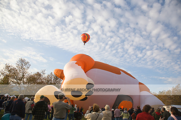 A giant dog balloon is slowly inflated, as other hot air balloons dot the skies at the 2008 Shenandoah Valley Hot Air Balloon Festival at Historic Long Branch in Millwood, Virginia.