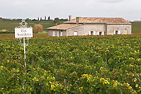 Vineyard. Winery building. Clos Saint Julien, Saint Emilion, Bordeaux, France