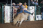 SEBRA - Gordonsville, VA - 9.8.2018 - Bulls & Action