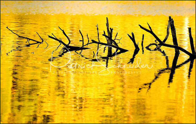 A tree submerged in a lake appears to be surrounded by gold as the setting sun reflects on the water.
